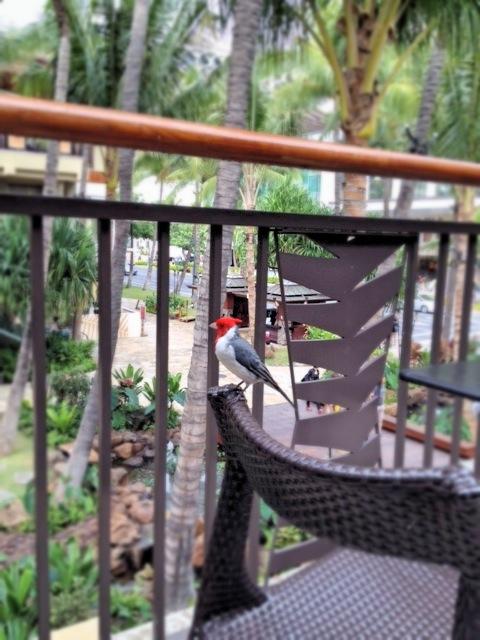 ハワイで見かける鳥